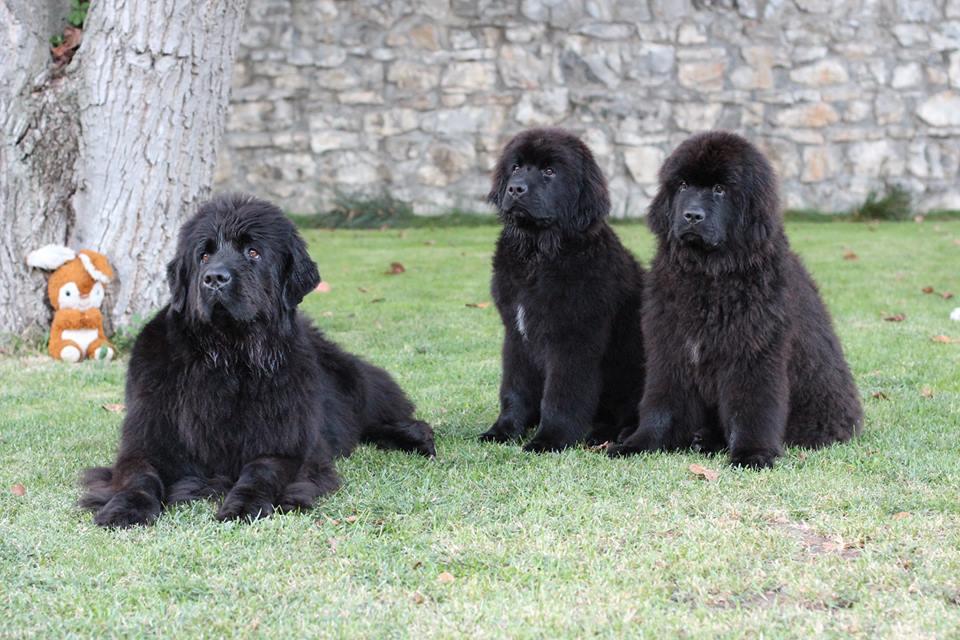 Anny, Ella, Rollo