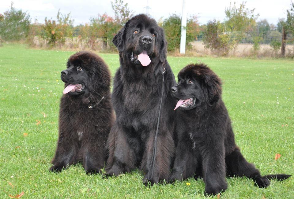 Rollo, Anny, Ella